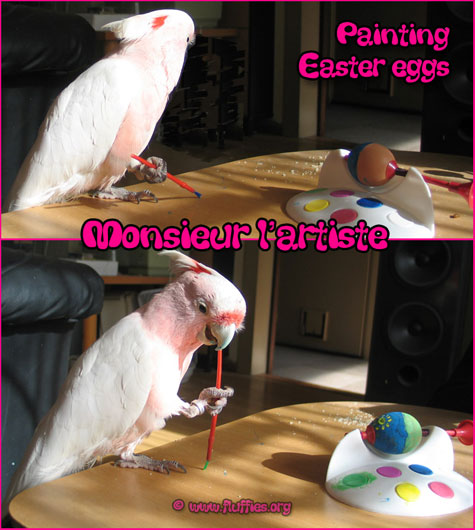 Cockatoo painting the Easter eggs!