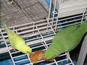 We can share! (Pistachio & budgie friend)