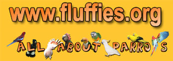 www.fluffies.org - It's All About Parrots!