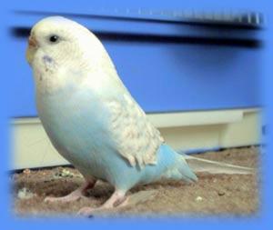 الطائر الطيب