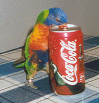 What do you think? Lorikeet coke commercial!